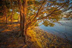 Rooted in history (MichaelSOwens) Tags: trees sunset landscape roots discarded hdr fernandina northflorida ameliaisland fortclinchstatepark southernredcedar ballaststones ameliarivercampground