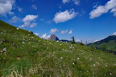 Mrchenwollgraswiese (brunoremix) Tags: sterreich alpen hohe pinzgau tauern bramberg kitzbheler