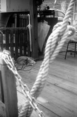 (defended) (Dinasty_Oomae) Tags: blackandwhite bw monochrome cat blackwhite kodak outdoor chiba  retinette ichikawa