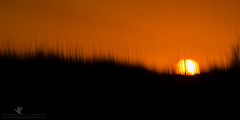 Fiya (santosh_shanmuga) Tags: light sunset red wild sky orange sun abstract motion nature beautiful grass yellow sunrise outdoors fire nc nikon slow outdoor gorgeous dune north northcarolina shutter stunning carolina pan outer 500mm outerbanks banks obx fiery fiya d810