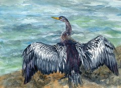Anhinga's Wings (molossus, who says Life Imitates Doodles) Tags: birds watercolor anhinga winsornewton sennelier globalartsmaterial