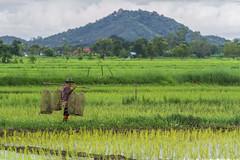 ChiangRai_5616 (JCS75) Tags: canon chiangrai asia asie thailand thailande