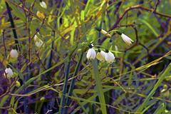 Winter Flora! (maginoz1) Tags: abstract art flowerpower winter july 2016 surreal curves luminosity alisterclarkmemorialrosegarden bulla melbourne victoria australia canon g3x