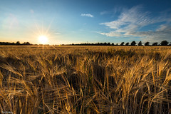 Field of Gold (PeteWPhotography) Tags: gold light sunset wheat golden colour lee