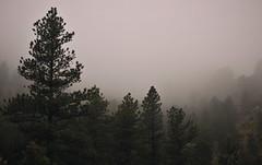 Mist, Fog & Rain (Patrick.Russell) Tags: mist rain fog 35mm prime spring nikon colorado boulder co showers d300