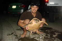 I found my Turtle after 7 Years , Saudi Arabia (clarkcollaboration2015) Tags: naif alghamdi