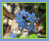 """Mother's Day ~ 2016"" (ellenc995) Tags: 2016 mothersday blue flowers thesunshinegroup platinumheartaward coth akob naturallywonderful sunrays5 challengeclub supershot abigfave hennysflowers citrit anawesomeshot thegalaxy 100commentgroup"