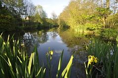 Collyer's Brook 135/366 (dawn.v) Tags: uk flowers england landscape countryside still pond nikon may naturereserve dorset wideanglelens 2016 collyersbrook 116photosin2016 366daysin2016 fonmellmagna