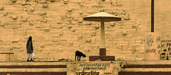 @ Varanasi, UP (Kals Pics) Tags: life travel people india man history animal yellow wall architecture stairs walk steps goat streetlife pole divine holy varanasi shelter spiritual legend myth roi benares kasi cwc sati uttarpradesh lordshiva manikarnika incredibleindia annapoorani spiritualcapital gahts rootsofindia kalspics culturalindia chennaiweelendclickers