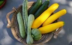 zucchine alla parmigiana in .. (RicetteItalia) Tags: zucchine parmigiana ricette