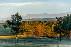 Colours of nature (Eustaquio Santimano) Tags: sunset nature beautiful evening colours wine australia nsw tasting wines pokolbin tyrells