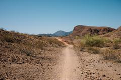 5R6K2866 (ATeshima) Tags: arizona nature havasu
