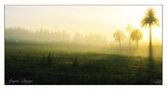 sombras (_Joaquin_) Tags: sol uruguay nikon flickr joaquin montevideo palmera niebla dx acontraluz perimetral d3200 35mm18g joafotografia joalc ruta102 lapizaga