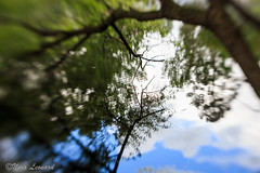 100 x Image 32/100 - Photos with the Lensbaby (norasphotos4u) Tags: trees reflection water lensbaby canon6d noraleonard