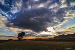 En algun lugar de la mancha... (jopas2800) Tags: sunset tree clouds landscape tokina1628 nikond610
