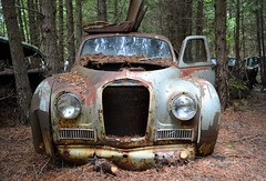 Sleeping with Elegance (timmerschester) Tags: old canada beautiful vintage woods decay rusty cedar junkyard lovely austina40somerset austinmotorcompany