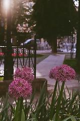 Zenit_Kosice_May-34.jpg (Iain Compton) Tags: urban film 35mm cityscape slovakia zenit helios kosice filmphotography portra400 zenite helios442 sovietcamera