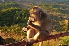 DSC02501 (Peripatete) Tags: bali mountains nature sunrise landscape volcano mount monkeys batur