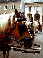 Horse Tours. (Aaron T Jones) Tags: horse salzburg tourism austria sterreich fuji tour carriage finepix s7000 oesterreich