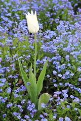 IMG_4441 (Irina Souiki) Tags: parcdesceaux france paris sceaux flowers nature parc park