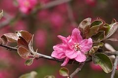 *** (pszcz9) Tags: flower nature closeup spring bokeh sony poland polska botanicgarden a77 wiosna przyroda kwiat beautifulearth ogrdbotaniczny zblienie
