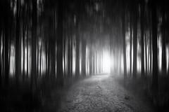 Hinters Licht fhren (Gruenewiese86) Tags: white black monochrome forest dark deutschland mono fuji tour schwarzweiss wald schwarz wandern harz wanderung sachsenanhalt xe1 wurmberg achtermann forestscape wwwohenzede darkwin ohenze