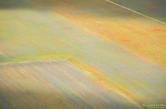 Breath (Maurizio Scotsman De Vita) Tags: natura landscape flowers nature abstract plantsflowers italia panorama vegetazione umbria vegetables papavero abstractions paesaggio astrazioni colourful vegetali papaversomniferum poppy fiori castellucciodinorcia astratto colorato impressionistic impressionistico livecolours