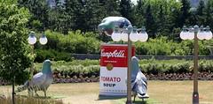 Ottawa (grab a shot) Tags: canon eos 7dmarkii canada ontario ottawa outdoor pigeons tomatosoup campbells