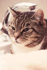 Skattie (Chau kar) Tags: cats cute animal cat bathroom pussy