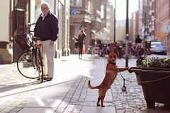 Dog Poser (polybazze) Tags: street urban dog pet interestingness europe sweden interestingness1 leash malmö flickrhivemindgroup