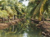 Kerala Backwater Backwaters India Indien Kollam District (c) (oksana8happy) Tags: copyright india reflection green nature water asia asien heiconeumeyer wasser december indian natur kerala palmtrees palmtree grün reflexion spiegelung palme indien backwaters coconutpalm backwater reflektion southindia cocotier keralabackwaters cocotiers southasia mirroring copyrighted palmen 2014 in coconutpalms indisch godsowncountry munroeisland kokosnusspalme kokospalme keralan keralanbackwaters coconutpalmtree südindien kollamdistrict keralabackwater südasien munroethuruthu munrothuruthu munroisland munroethurutthu munroeturuttu munrothurutthu munroturuttu peringalam perugalam keralanbackwater tp201415