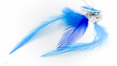 Hope is the thing with feathers ... (babs van beieren) Tags: blue hope soft feather highkey