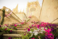 Feria de las Flores (Burgos) (_JMG_) Tags: feria de las flores burgos catedral catedraldeburgos cathedralofburgos cathedral fiestadelasflores flowerfestival flower nikon d7100 tokina 1120
