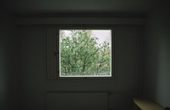 spring (Ilona Fogelson) Tags: light house tree window digital canon finland photo spring room indoor minimalism emptiness mikkeli canonef24105 canon24105 canon6d