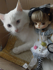 Buona la prima! (good first take) ~ SAM_6687_Dal_Hinaichigo_ (applecandy spica) Tags: pink flowers blue white black clock socks shirt cat bag furry kitten chat doll soft dress bell handmade lace buttons sewing watch kitty dal sleepingcat bow loli teapot handcrafted pullip handsewn katze custom fatcat teacup weiss gatto bianco blanc porcelain striped headband kittie skyblue peasant pocketwatch lightblue gipsy ktzchen micio chaton gattino kirakira weis dolldress handcrafting dollclothes handsewing soffice peloso morbido micetto micione applecandy hinaichigo gattodorme gattochiatto cabochoneyes