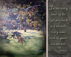 The Miracle of Sunlight (extremely fickle) Tags: sunlight photoshop outside spring quote filter lightanddark