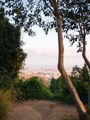 Barcelona skyline (lorenzoviolone) Tags: barcelona trip travel trees sea sky skyline spain skyscrapers hike journey finepix fujifilm catalunya parkguell fujiastia100f fav10 mirrorless vsco vscofilm fujix100s x100s fujifilmx100s travel:spain=barcelona2015