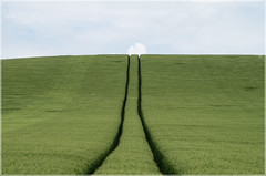 Lines (arno.hoyer) Tags: pentax lines meadows nature green grn k30 minimalistisch minimal