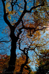 Crooked Tree (SamuelWalters74) Tags: newyorkcity autumn trees newyork unitedstates centralpark manhattan fallcolors places autumnleaves autumncolors fallfoliage centralparkinautumn