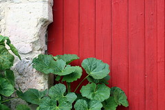 Cohabitation harmonieuse (Nadia (no awards please !)) Tags: door wood red leaves stone wall rouge pierre porte mur turenne bois feuilles