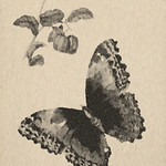 """Butterfly100_11x17_LowRes <a style=""""margin-left:10px; font-size:0.8em;"""" href=""""http://www.flickr.com/photos/35232840@N08/18244565580/"""" target=""""_blank"""">@flickr</a>"""