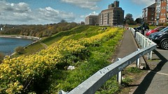 Tynemouth, Tyneside (malivsey) Tags: apartments path headland