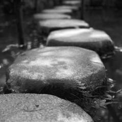 Stepping stones (Mark Dries) Tags: spur focus fp4 selective planar ilfordfp4 hasselblad500cm markguitarphoto markdries rolleisupergrain