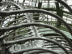 Skeleton and ribs - Grand Palais, Monumenta (Monceau) Tags: metal skeleton snake exhibition anatomy ribs bones serpent grandpalais monumenta huangyongping