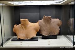 M5144469 (pierino sacchi) Tags: mostra pavia scultura porro onoff pittura comune broletto miamadre paolomazzarello sistemamusealeateneo