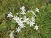 034 (en-ri) Tags: fiorellini bianco erba verde grass sony sonysti