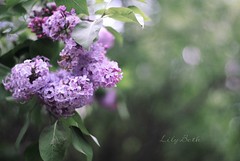 - (-LilyBeth) Tags: flowers green nature outside 50mm nikon dof bokeh natura depthoffield wonderfulworld d3000