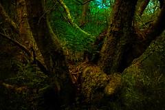 Old Tree (alanmcilwraith) Tags: scotland cumbernauld broadwoodloch forest trees