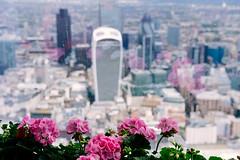 The City from the Shard Sky Garden ({Laura McGregor}) Tags: city london urban architecture skyscrapers garden flowers skygarden viewfromtheshard theshard fujixpro2 vsco vscofilm cityscape