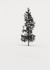 A Dream within a Dream (hiromichiendo) Tags: blackandwhite bw snow abstract tree art nature monochrome japan landscape still fineart silence zen nd minimalism tranquil
